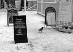 Självservering för en kråka (2005)